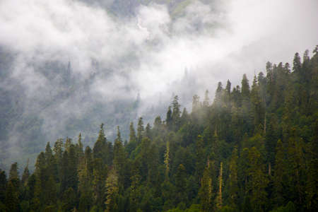 Wonderful and amazing landscape, foggy and misty mountain view in Svaneti, Georgia. Summer in Georgia. Banco de Imagens