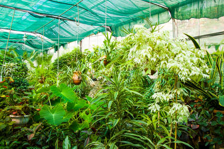 Orangery tropical plants and growth in Tbilisi botanical garden, Georgia