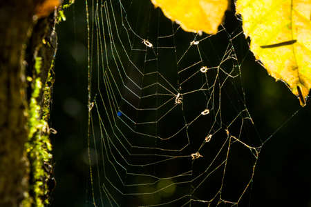 Spider web macro background, sunlight and shadows in park Standard-Bild - 157119524