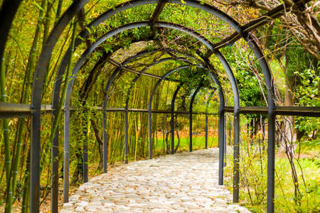 Natural tunnel in the park, green colors plant and iron fence, Georgia