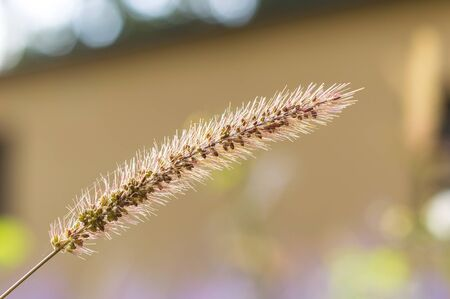 textured wall: Flower grass impact sunlight in autumn. Stock Photo