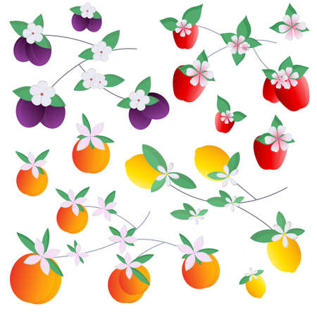 Set of fruits apples peaches lemons plums. Vector illustration for postcards, printing on fabric or dishes, for patterns, for book illustration