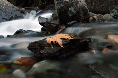 sycamore leaf: Sutven WATERFALL AND CREEK
