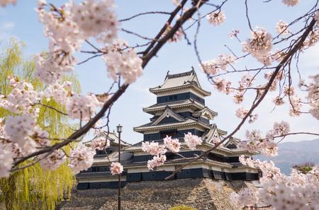 matsumoto: Matsumoto castle with spring cherry blossoms