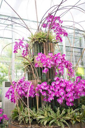 pink orchid in the indoor garden Stock Photo