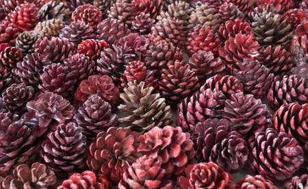 Background of the pine cone