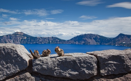 Chipmunks snacking on sunflower seeds at Crater Lake Park in Oregon. Stock Photo - 8557975