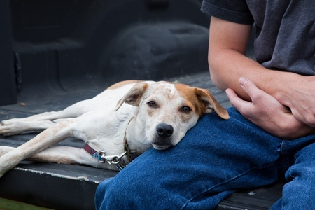 A young man and his dog sit in the back of a pickup truck watching a rodeo in Washington. Stock Photo