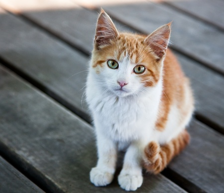 A beautiful stray kitten with green and gold eyes, sits perfectly still waiting to see if food will be given.
