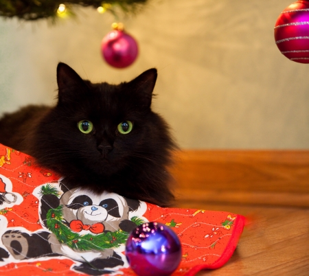 A fluffy black cat with green eyes watches from under the Christmas tree after knocking a purple ornament to the floor.