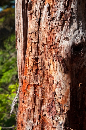 decomposition: A close up section of dead tree showing decomposition of the wood and bark. Stock Photo