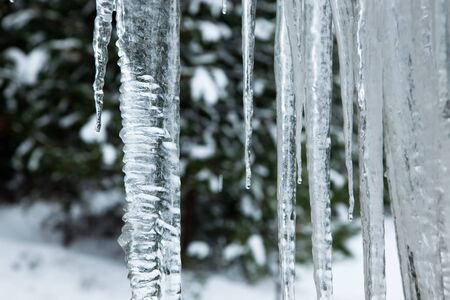 Close up of a large wavy icicle with more melting icicles beside it and a soft winter background. Stock Photo - 11583108