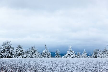 A wooden fence with a row of evergreen trees behind it are frosted white with a coat of new snow with a dark sky above. Stock Photo