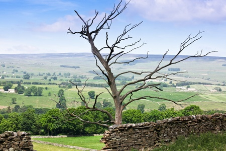 broken hill: An old dead tree skeleton holding up a section of broken rock fence on a hill in the English countryside.