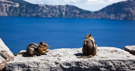Two cute chipmunks eat sunflower seeds in the sunshine while overlooking the spectacular sight of Crater Lake. Stock Photo