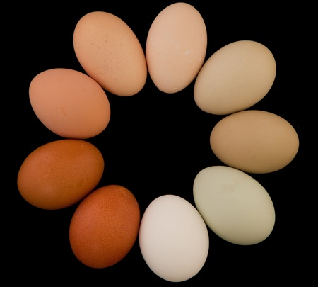 imperfection: Free range organic eggs in various colors and sizes form a rainbow circle isolated on black.