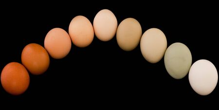 imperfection: Free range organic eggs arched in a rainbow of natural colors isolated on black.