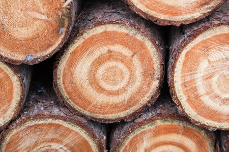 Rounds of stacked Tamarack firewood showing a natural bulls eye pattern in the rings. Stock Photo - 12899561