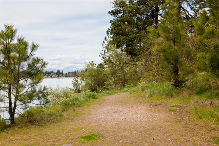 A nature path through pine trees and blooming bushes and plants next to Lake Coeur dAlene, Idaho on an overcast day.