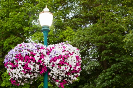 Two baskets of beautiful pink, white, and purple flowers hang on either side of a lamp post at twilight with maple trees in the background. photo