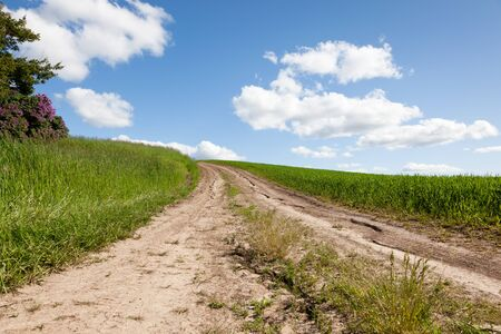 A dry cracked dirt road goes up a hill framed by thick green grass and blue sky with white fluffy clouds. photo