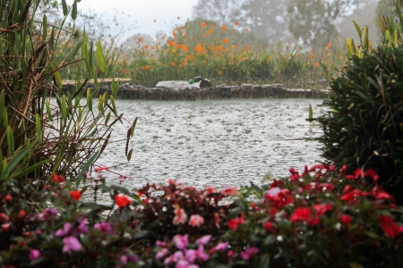 A heavy down pour of rain makes splashes on a small fish pond that is surrounded by plants and flowers in Costa Rica.