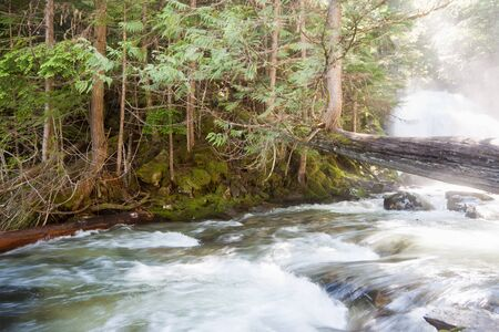 A rushing river flows under a fallen cedar tree that now has a new tree growing off of it with misty waterfalls in the background. Stock Photo - 16388118