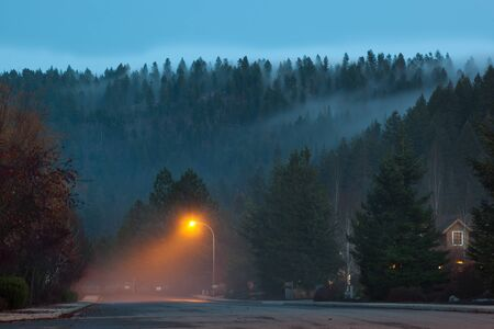 settles: A fog bank creeps over a mountain of tall evergreen trees and settles in under a street light of a quiet neighborhood.