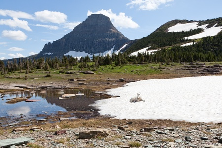 A wild mountain goat laying in the sunshine on a sheet of snow which is gradually melting into a puddle with large mountains in the background. Glacier National Park, Montana. Stock Photo - 18413384
