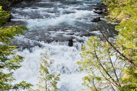 A fast flowing river background framed by delicate branches on cedar trees in Glacier National Park, Montana. Stock Photo - 18413389