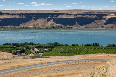 wine road: A view of the Columbia River with a green vineyard and road on the Washington side and a highway and steep embankment on the Oregon side.