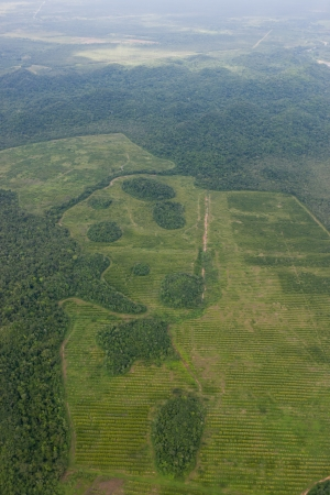 exporter: An orange tree orchard planted in rows around the natural topography of the land as seen from above in Cayo District, Belize  Stock Photo