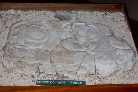 cultura maya: Una antigua talla de piedra de la cultura maya en la exhibici�n en Lamanai, Belice.