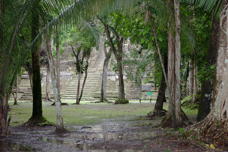 Looking through the jungle trees at the base of the stone High Temple Pyramid at the Mayan site of Lamanai in Belize.