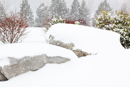 blanketed: Two large boulders in a park are covered in white fluffy snow with more snowflakes falling in the wind on the bushes and trees in the background.