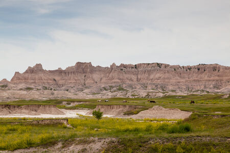 dynamically: Seven horses in a green field below the dynamically carved mountains of the Badlands in South Dakota.