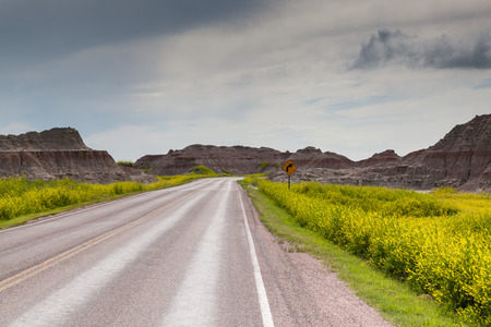 A yellow caution sign warns of a corner ahead driving through the wildflowers and eroded formations of the Badlands National Park, South Dakota.