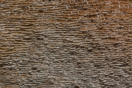 Small terraced layers made from hot mineral water and live bacteria in Yellowstone National Park. Background.