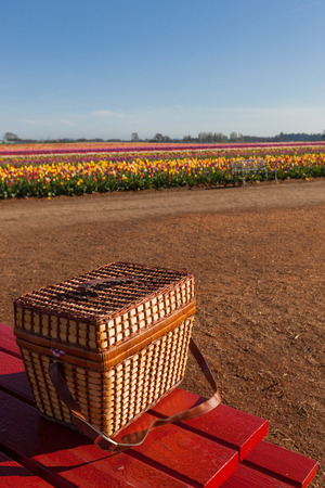 picknick: A wicker picnic basket sitting on a red table at a farm with rows of colorful tulip blooms in the background. Stock Photo