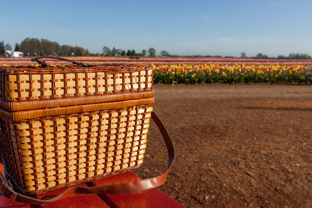 A wicker picnic basket sitting on a red table at a farm with rows of colorful tulip blooms in the background. Stock Photo