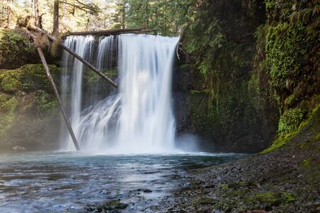 silver state: The Upper North Falls located in Silver Falls State Park in Oregon cascading over rock and under dead trees.