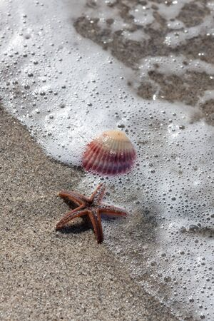 An orange starfish and a pink sea shell on a tropical beach with a wave of bubbles around them. Stock Photo