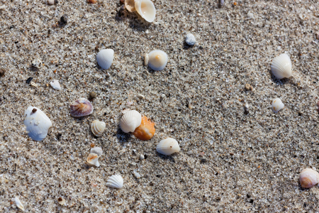 A background of small tropical sea shells and sand on a beach in Panama. Stock Photo