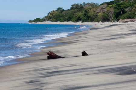 A piece of palm tree driftwood covered by black and tan sand on a tropical beach with trees and people. Stock Photo
