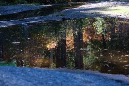 A calm stream of water reflecting the afternoon light in the trees and bushes of the forest around it.