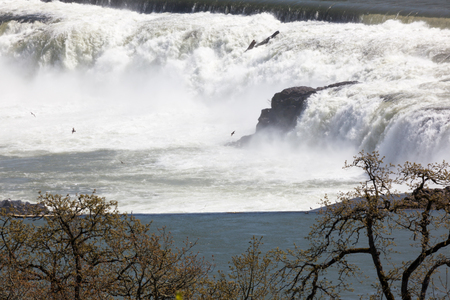 The water of the Willamette River cascading over Willamette Falls with birds in the mist on a spring day. Stock Photo