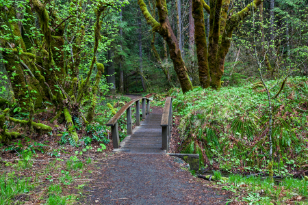 A small wooden walk bridge begins the trail through thick forest to Toketee Falls in Oregon.