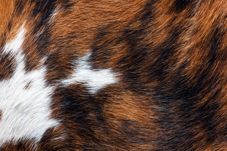 A close up of marbled red, black, and white cow fur glowing in the sunshine.