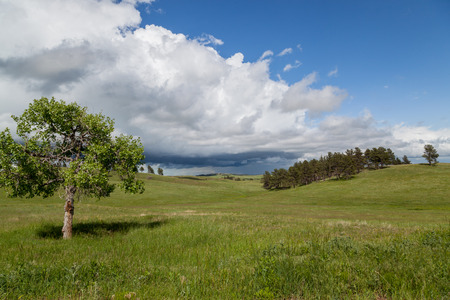 A single tree in the grass prairie of Wind Cave National Park with rolling hills, a group of evergreens, and an ominous storm cloud in the distance.
