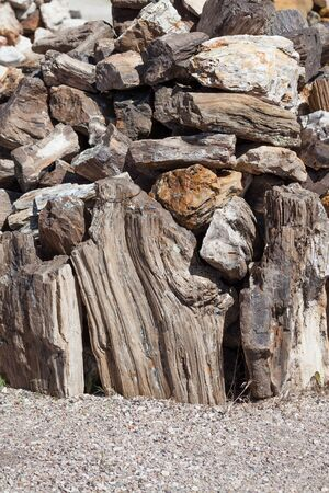 A pile of petrified wood pieces stacked together in the sunshine in South Dakota.